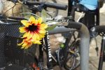 K640_foto10FischerPaula01